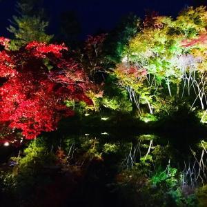 【京都一高台寺】日帰りで紅葉を楽しむ。旅行での注意点まとめ。