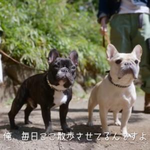 ロト&ナンバーズ新CMが良い!