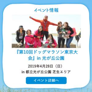 ★『第10回ドッグマラソン東京大会』in 光が丘公園に出店決定★