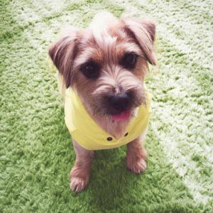 ★ビビッドカラーが眩しい!小型犬ドッグウェア★