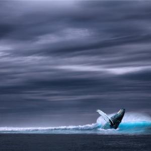 海の中で育った魚は海を知らない!身近な幸せに気付くかの差で世界は変わりますよ!