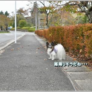 散歩のち雨・・・!?