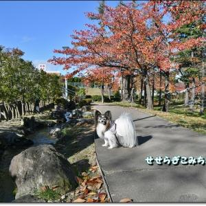 開成山公園の紅葉
