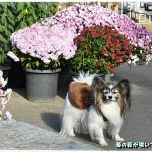 霞ヶ城公園散歩その1