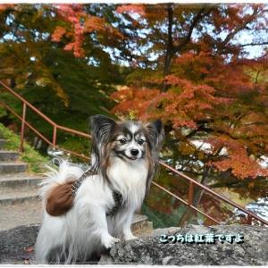 霞ヶ城公園散歩その2
