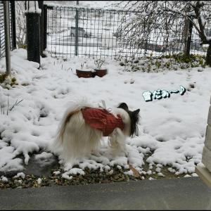 突然の雪にビックリ!