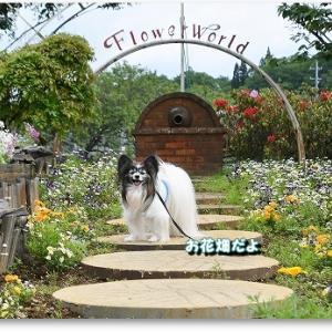 お花畑へGO!!