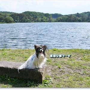 南湖公園で珍しいペットに遭遇