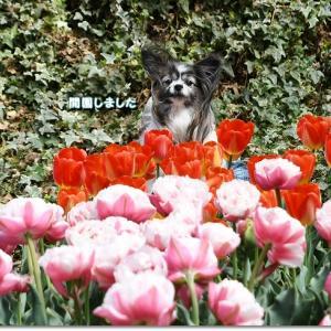 お花畑散歩