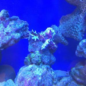 サンゴ追加しました!!