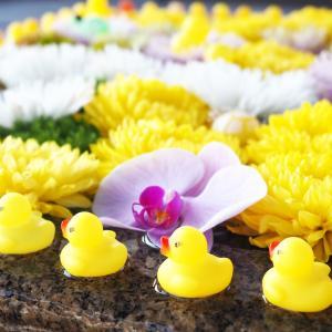 【神社仏閣】アヒルの御手水がかわいい「金戒光明寺」。