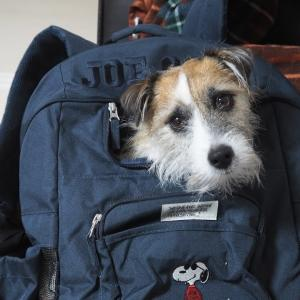 新しいリュック型犬キャリーを購入!しかし…激しく拒否!涙