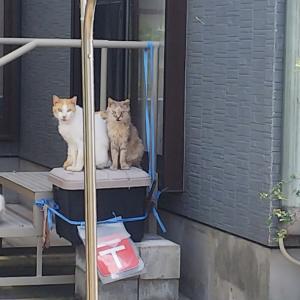 多頭飼育問題・亡くなった飼い主の猫たち(佐賀市)