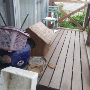 餌やり禁止・・・野良猫たちを裏切らないで地域猫へ