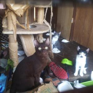 劣悪環境の中で生活する飼い主と多頭飼育猫たち(佐賀市)