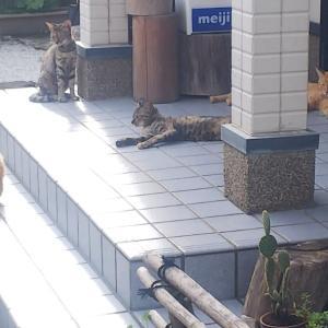 突然現れた1匹の猫のはずが・・・