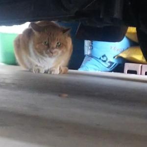 野良猫だと思って手術したら鈴つけてきた猫たち
