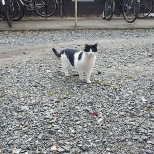 過疎化する地域で増える猫のTNR!