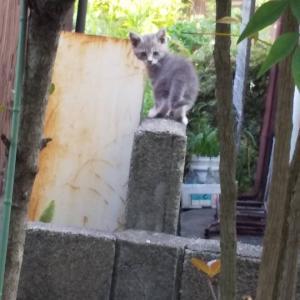 里親さま募集!母猫を事故で亡くした子猫たち、たくましく育ってます