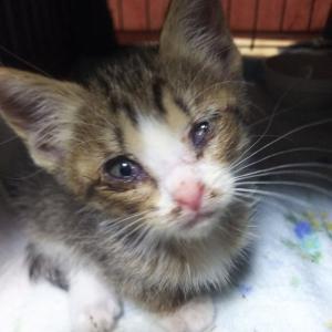 保護子猫たちの先天性疾患…事故による手術…等々