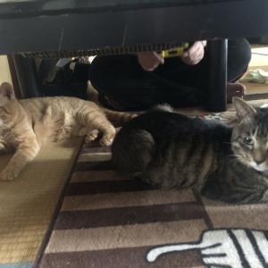 動物管理センターから来た猫さんたち正式譲渡♪