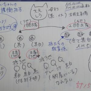 高齢者さんの多頭飼育問題~のTNR(その①)