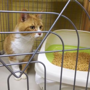 動物管理センターにお迎え猫たち