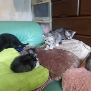虐待の恐れから保護…の子猫たちも幸せに!