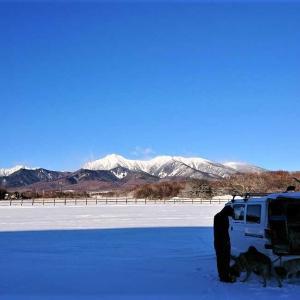 1月16日の状況です(積雪・犬ぞり・暖冬)
