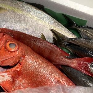 <おうちで食育>朝どれ魚を漁師直送!おまかせお取り寄せセットとは?