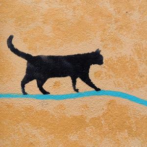 動物病院|猫の引越相談