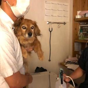 コロナ禍、動物病院へ