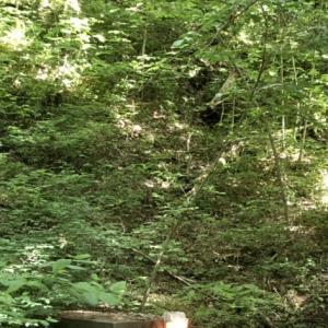 6月のアメリカへの出張の旅の記録⑦ マンモスケーブ国立公園 その2