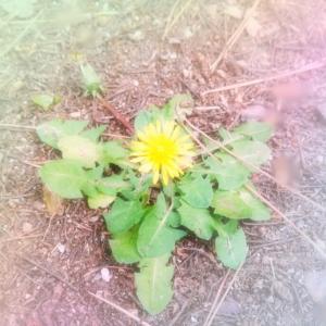 足もとの花に気づけるように、ゆっくり生きていきたいな。
