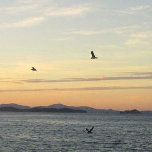 【豊浜漁港】 涼しい早朝のうちに