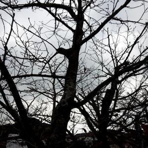 大雨前のお散歩&桜・・・
