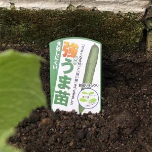 家庭菜園で元を取る! 約2300円分の苗と肥料で『我が家の畑2021』、始動です!