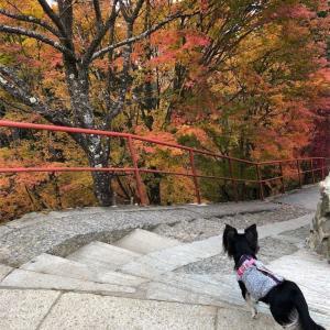 御岳山へ愛犬マロンと紅葉狩りへ