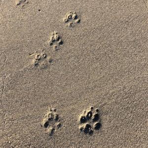 犬と一緒に正月旅行! アニマルキングダム → ワンコOKの食事処あかざわ  その3