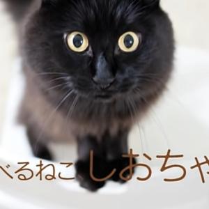 しゃべるねこ、しおちゃん!飼い主のしんコロとは?アメリカ在住の人気黒猫に癒されよう!