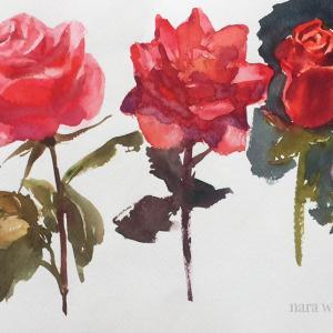 9月19日 透明水彩で「花」を描きませんか?