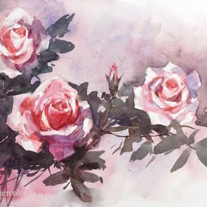 「バラ」を描く水彩体験レッスン