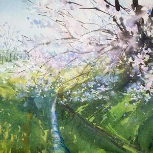 今年最後の桜描き