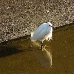 吞川で見かけたこんな鳥、あんな〇〇?