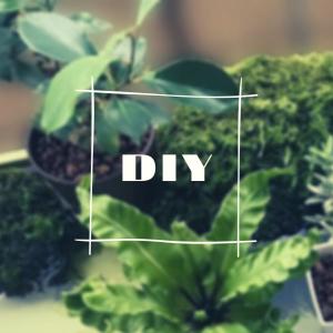 ビオトープから水を循環させて、水栽培する。