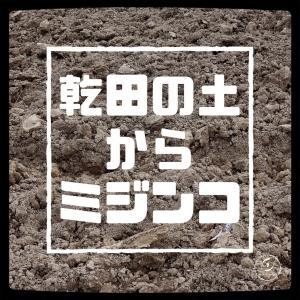 田んぼの土からミジンコを復活させる。