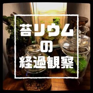 苔リウム、12日間の変化。