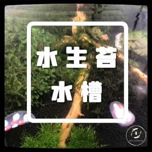水生苔を採取。