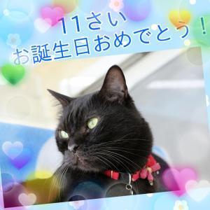 ジジくん お誕生日おめでとう!