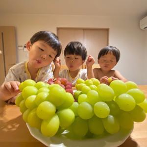 【三つ子とぶどう】長野県からの贈り物~♡!!!